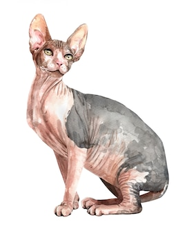 水彩のスフィンクス猫が座っています。