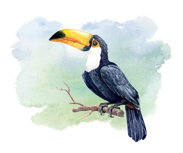 Акварельная птица тукан на ветке дерева