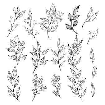 葉コレクションと手描きの枝。装飾用の装飾要素