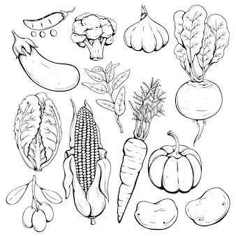 描かれた手のセットまたは新鮮な野菜をスケッチする