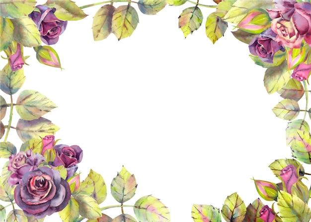 バラの花を持つ水平フレームの背景。水彩組成