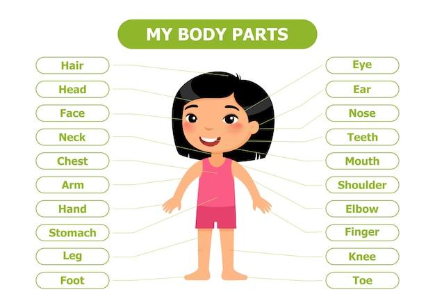 Анатомия для детей.
