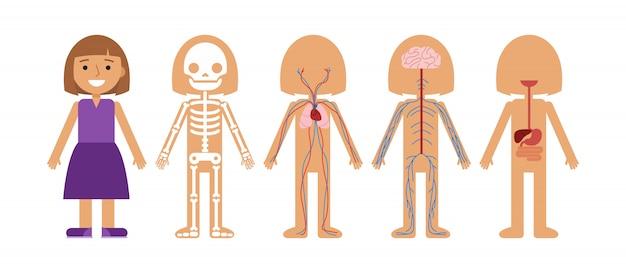 女の子の体の解剖学的なベクトル図。