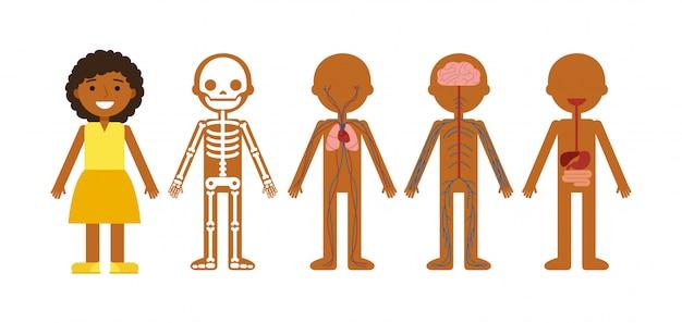 体の解剖学のベクトルイラスト