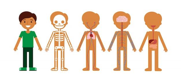 体の解剖学のベクトルイラスト。