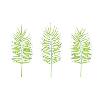 夏の植物の葉