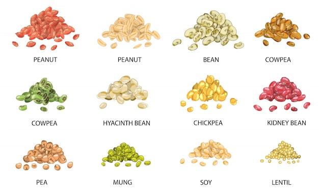 手のセットは、豆の種子の色の山を描画します。