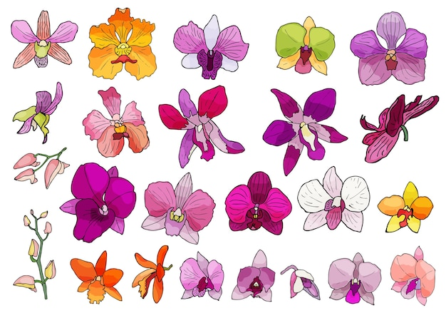 手で描かれた蘭の花のセット。