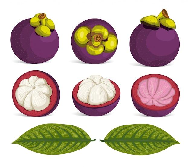Фиолетовый мангостан фрукты изолированные вектор