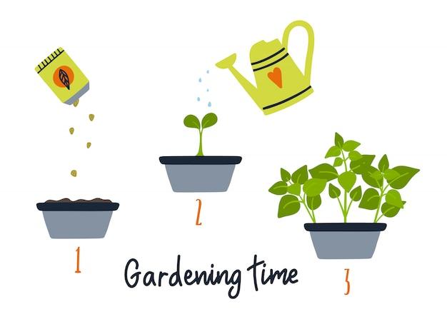 ラインの発芽と植物の成長。