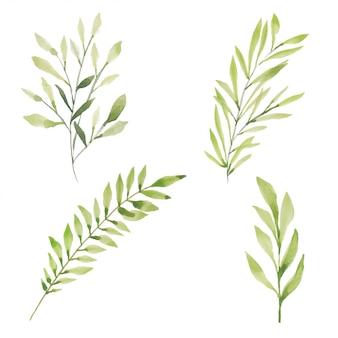 水彩の手描きの緑の葉の葉の要素