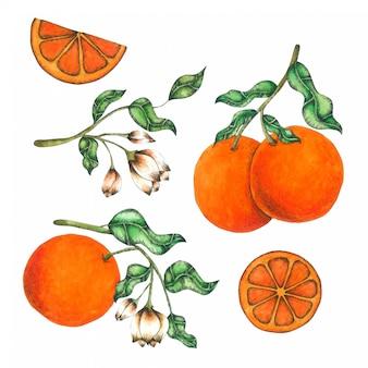 オレンジ色の手描きの水彩画コレクション
