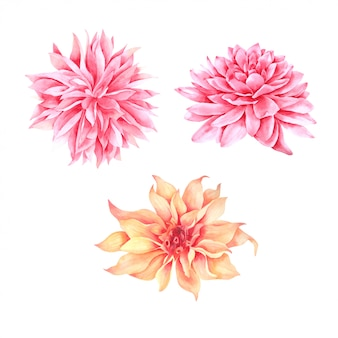 Розовая цветочная акварель