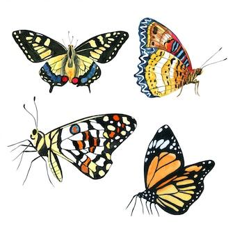 蝶の水彩画コレクション手描き