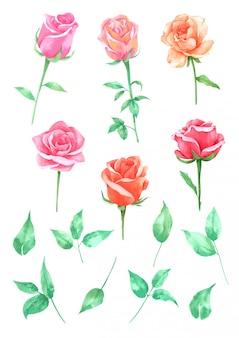 バラの花の手描きの水彩画コレクションに描かれています