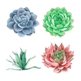 多肉植物サボテンの手描きの水彩画コレクション