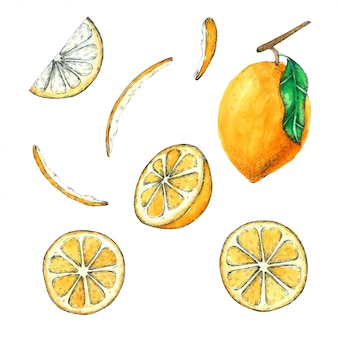レモンの手描きの水彩画コレクション