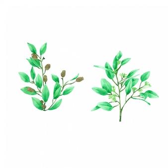 水彩画コレクションに描かれた緑の葉手