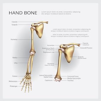 アームと手の骨のベクトル図