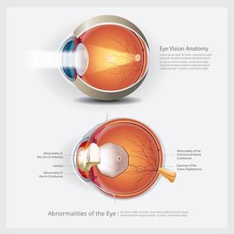 人間の目の解剖学と通常のレンズのベクトル図