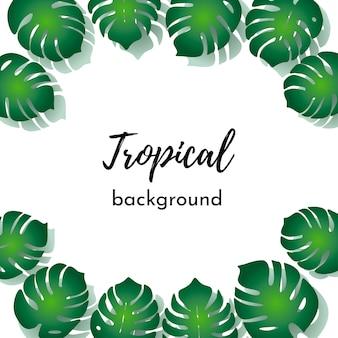 カード、ポスター用のベクトルテンプレート。緑のエキゾチックな熱帯ヤシの葉のテキストのための場所