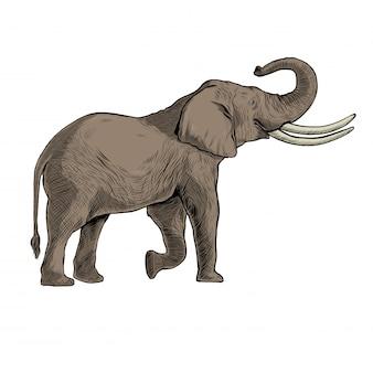 黒のラインアートで手描きのアフリカゾウ