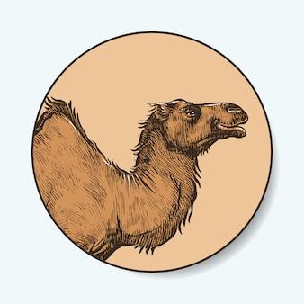 ラクダの手描き