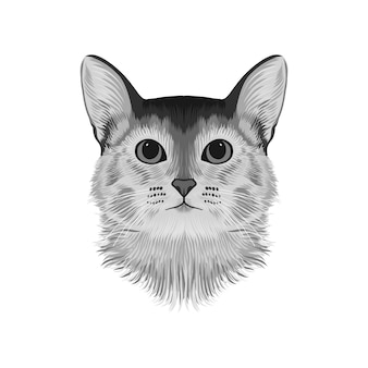 アビシニアン猫の頭のアバター