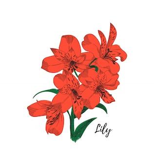 Лили цветок рисунок. красочная линия искусства иллюстрации.