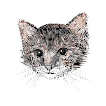 小さな猫、子猫のイラスト。手描きのスケッチ図面。ペットの肖像画、かわいい動物