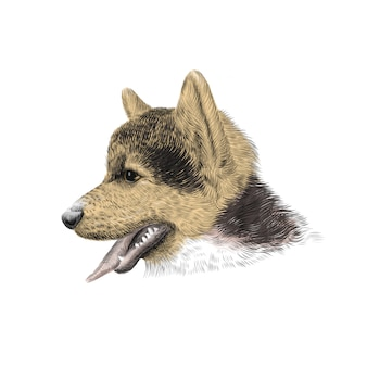 ペンブロークウェルシュコーギートリコロールの子犬。ペットの肖像画、クローズアップスケッチ。図