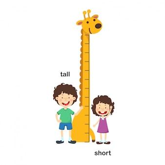 背の高い、短いベクトル図
