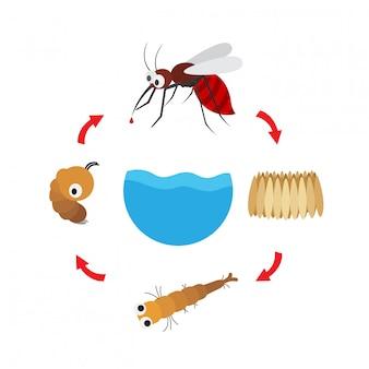 イラストライフサイクル蚊