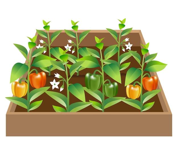 野菜園 - ピーマン
