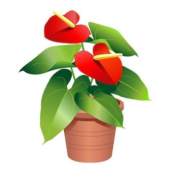 鉢植えのアンスリウム植物