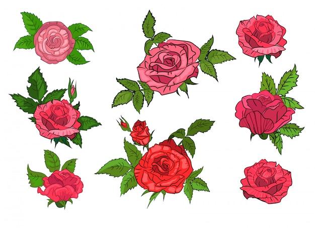 孤立した背景に赤いバラのセット