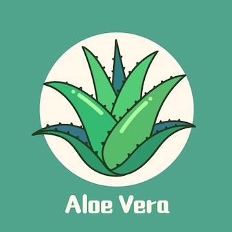 アロエベラの植物