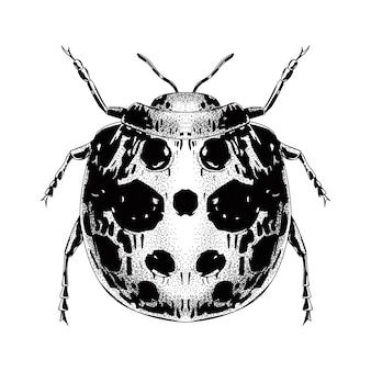 ヴィンテージスタイルの手描き昆虫