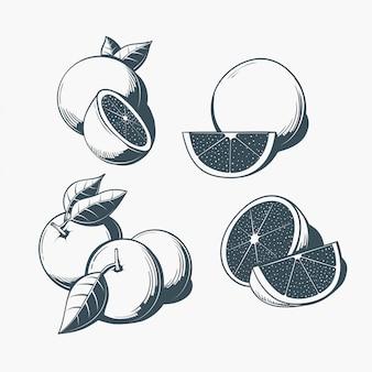 ビンテージオレンジフルーツコレクション