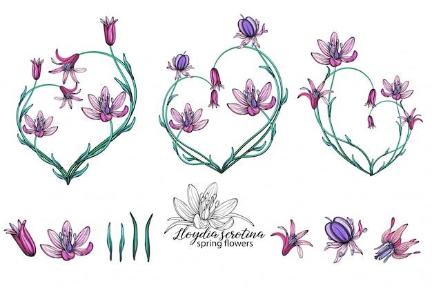 Векторный набор нежных весенних цветов. цветы. весенние цветы. сердце из цветов.
