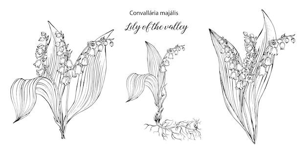 リリー・オブ・ザ・バレーの花と黒と白の花の組成をベクトルします。