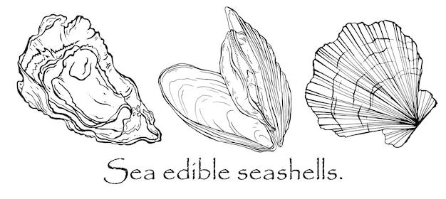 Вектор черно-белый узор из ракушек, мидий, морского гребешка