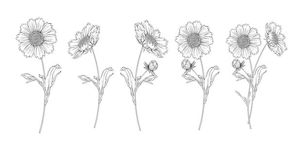 カモミールの花を持つベクトル黒と白の輪郭のフラワーアレンジメント