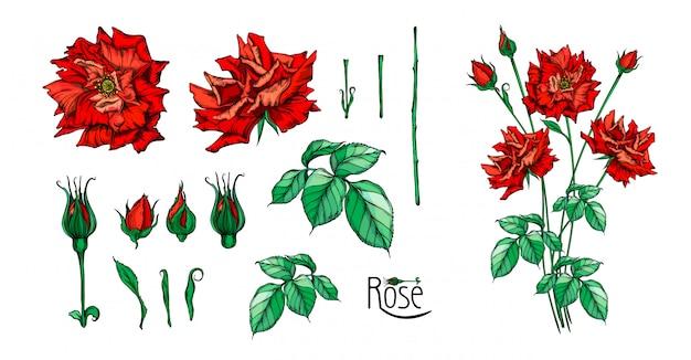 バラの花とフラワーアレンジメントのセット。