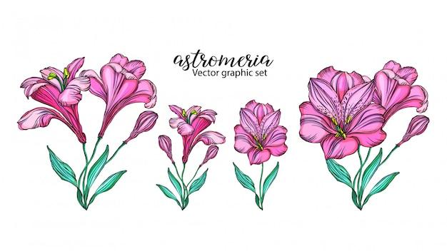 Набор векторных цветов альстромерии