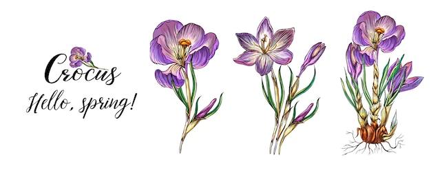 鮮やかな色の春の花のコレクション