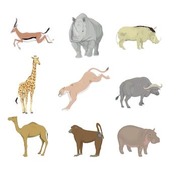 動物のアフリカ