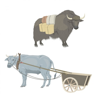 国内の雄牛、牛