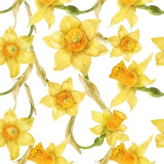 水仙と水彩の現実的な黄色の花柄