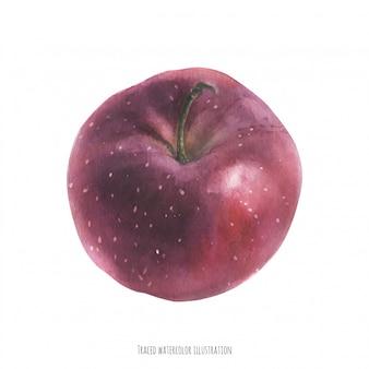 水彩の大きな赤いリンゴ